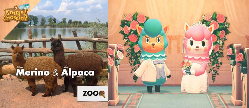 Animal Crossing arriva al Bioparco ZOOM di Torino!