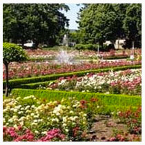 Piedmont neighborhood featuring Portland rosegardens