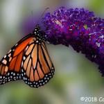 2nd Place Wildlife - Feeding Time by Carol Todd