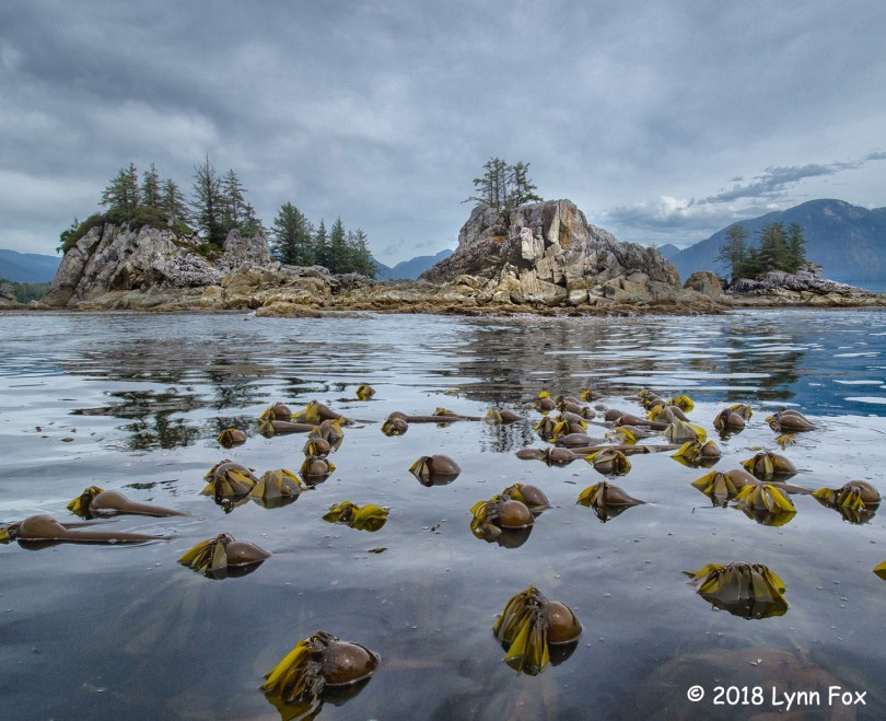 1st Place Scenic - Wild Island with Bull Kelp by Lynn Fox