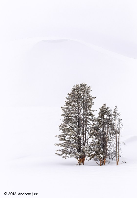 1st Place & People's Choice Scenic - Lone Trees in Snow by Andrew Lee