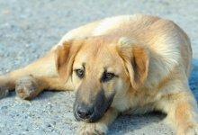 Photo of Καρδίτσα: Δύο σκυλιά βρήκαν τραγικό θάνατο από εμπρησμό σε χώρο για ανεμογεννήτριες