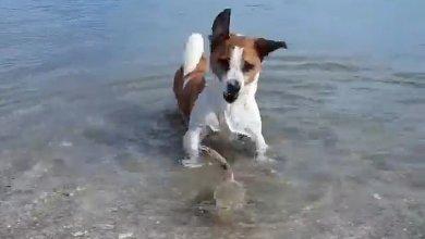 Photo of Η απίστευτη μάχη σκύλου με…καβούρι (Βίντεο)