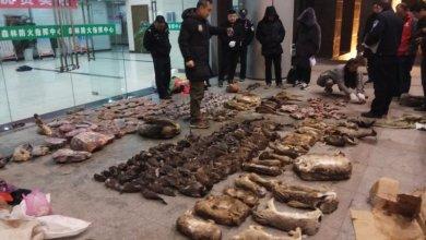 Photo of Κοροναϊός: Η αποκρουστική αγορά που «γέννησε» τον πιο φονικό ιό στον κόσμο