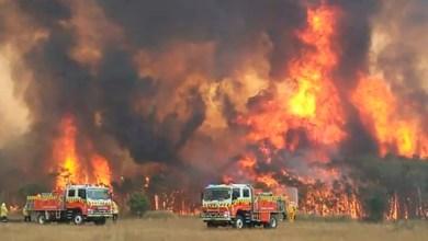 Photo of Σοκαριστικά στοιχεία: 3 δισεκατομμύρια ζώα κάηκαν ή εκτοπίστηκαν στις φονικές πυρκαγιές της Αυστραλίας
