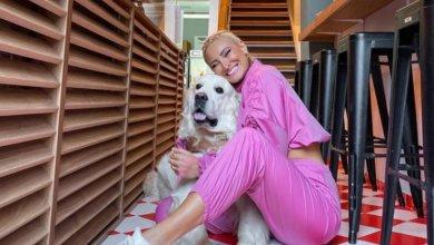 Photo of Σκύλος επιτέθηκε στην Ιωάννα Τούνη και μεταφέρθηκε σε νοσοκομείο