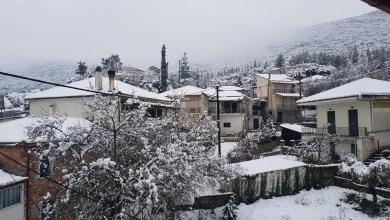 Photo of Αμυγδαλιά Φωκίδας: Όμορφες εικόνες από το χιονισμένο χωριό