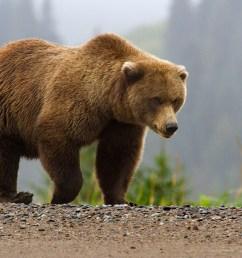 bear hunting diagram [ 1200 x 675 Pixel ]