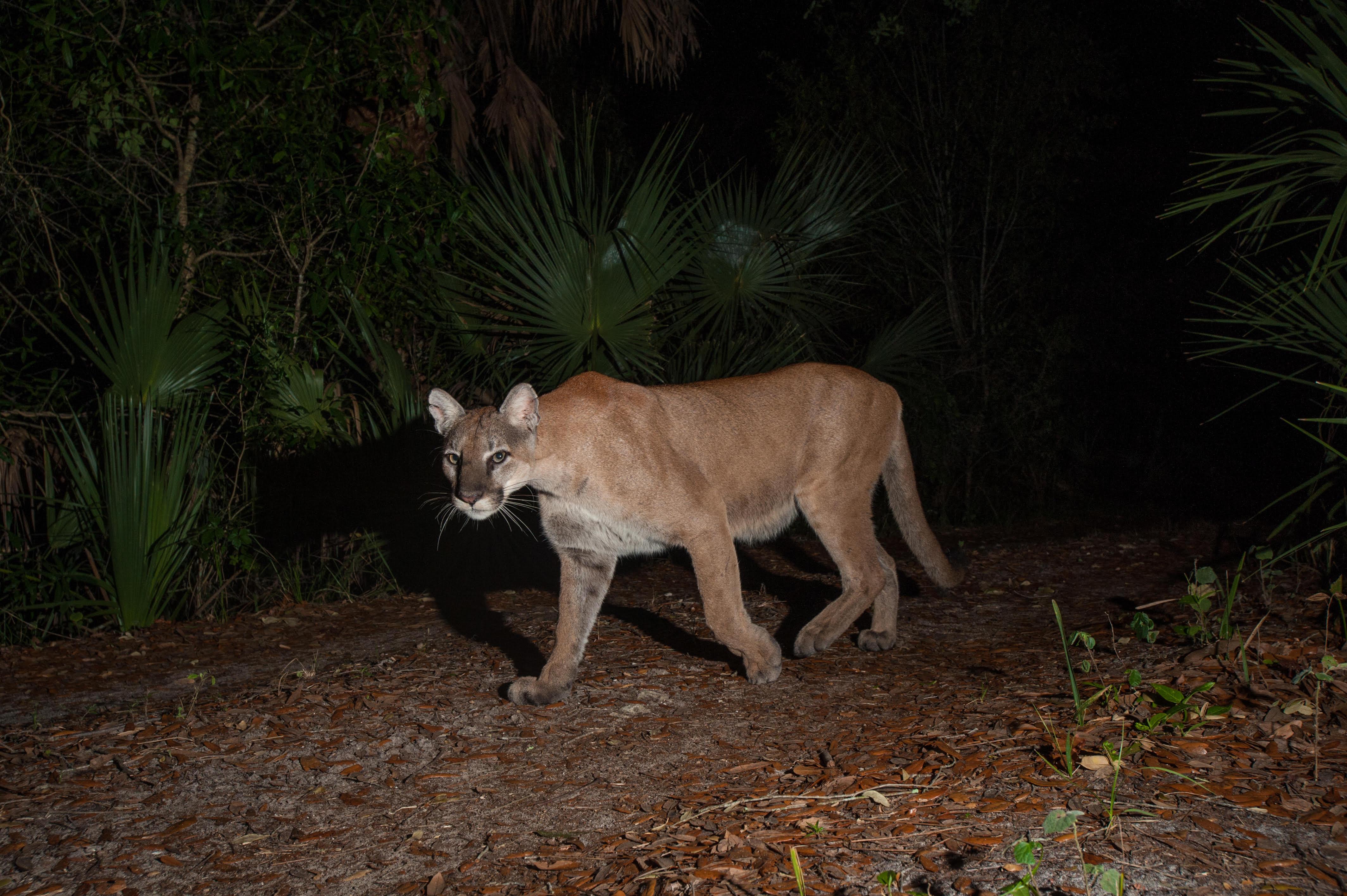 Animals Need The Dark U S National Park Service