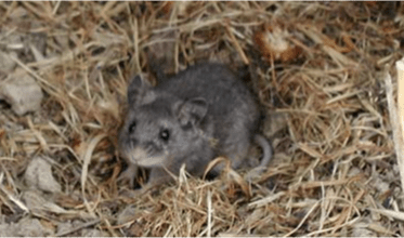One Health and Disease: Hantavirus (U.S. National Park Service)