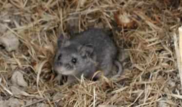 One Health and Disease: Hantavirus (U.S. National Park Service)
