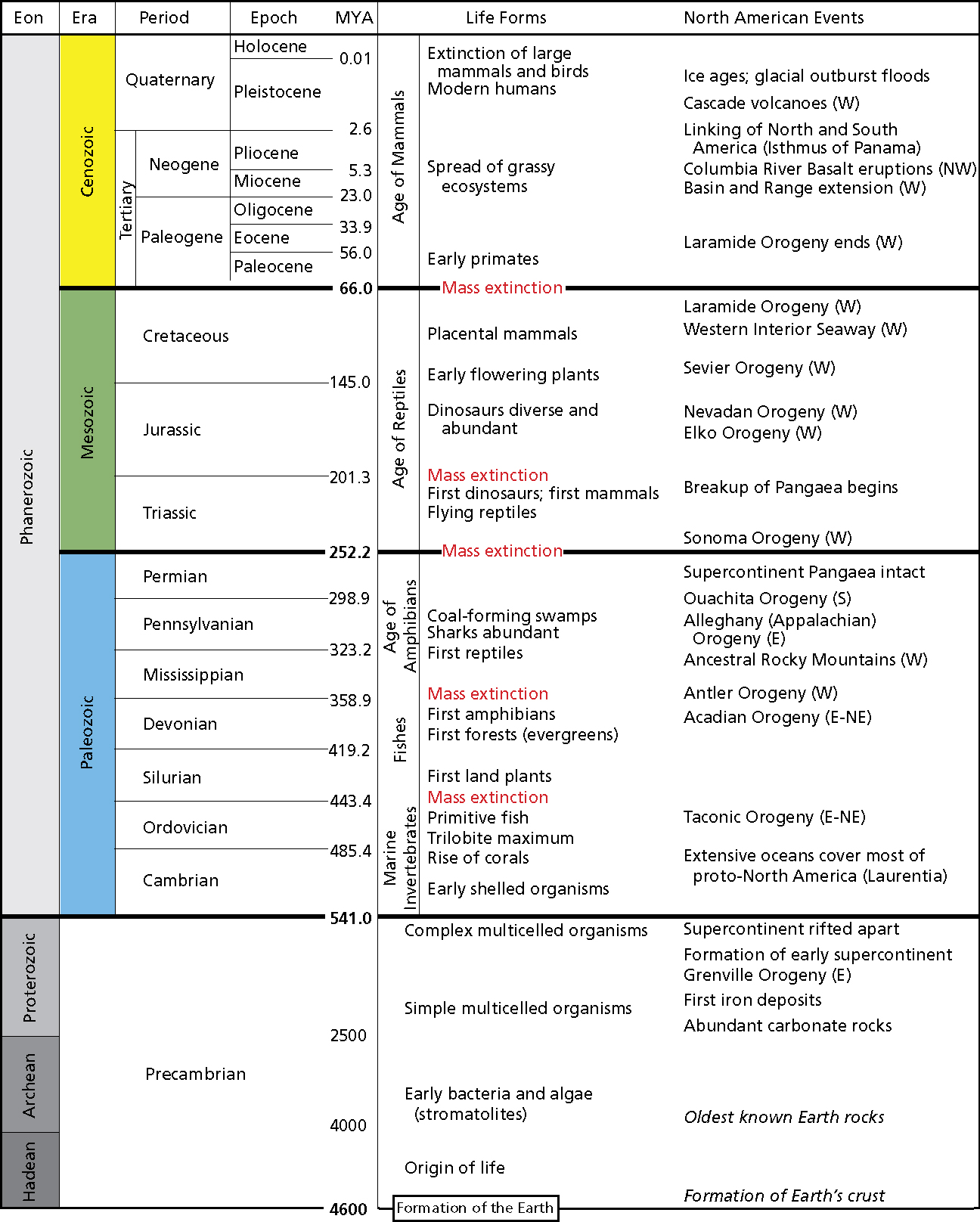 Fossils Fossils Geologic Time Scale