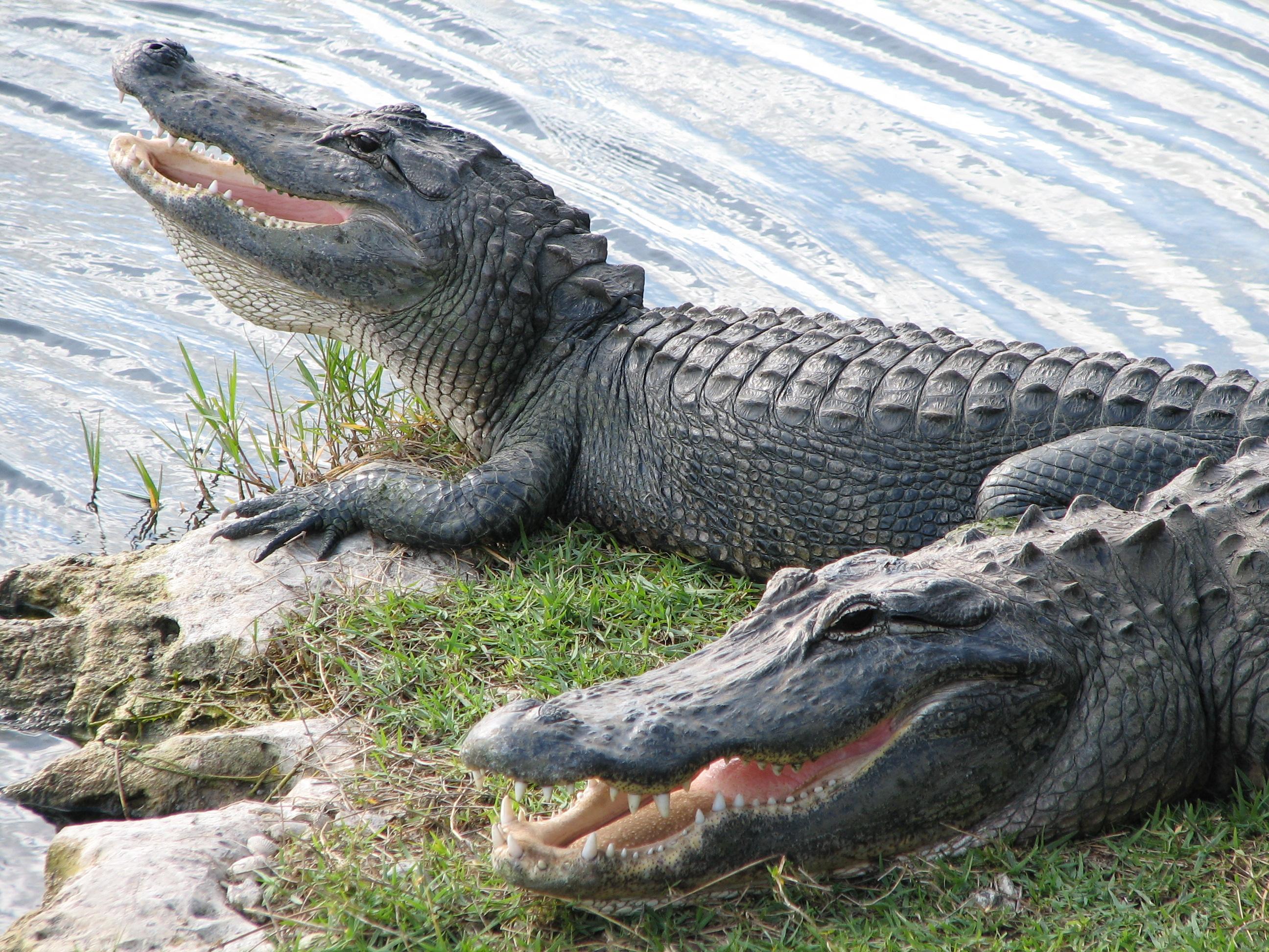 Alligator Point Florida