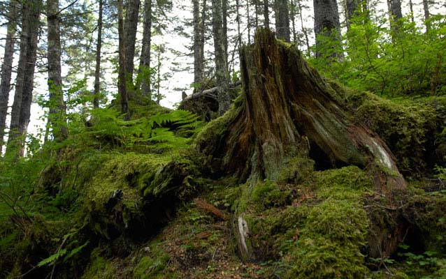 Canadian journal of forest research. Succession And Nutrient Cycling In A Temperate Rainforest Ecosystem Teachers U S National Park Service