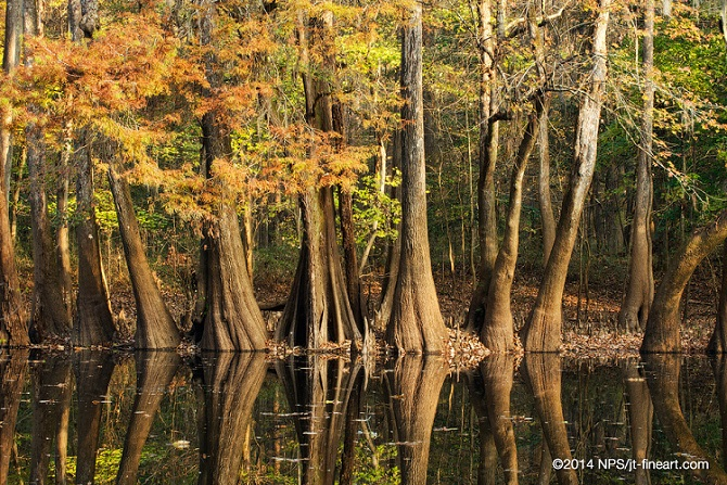 Weather  Congaree National Park US National Park Service