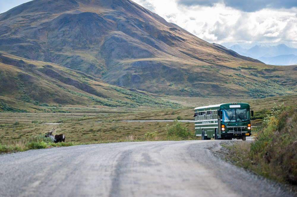 A bus stops to view a caribou