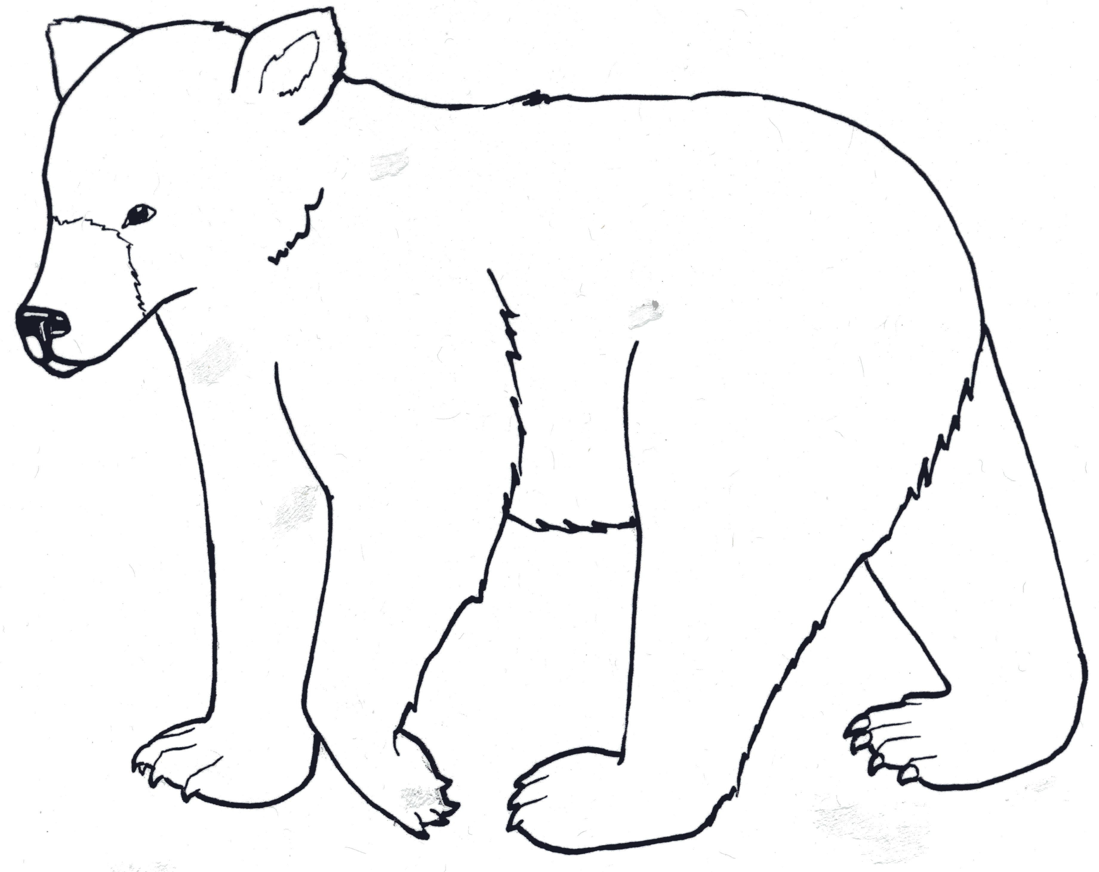 K 3 Unit Four Activity 1 Goldilocks And The Real Bears