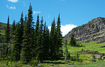 trees and shrubs - glacier national