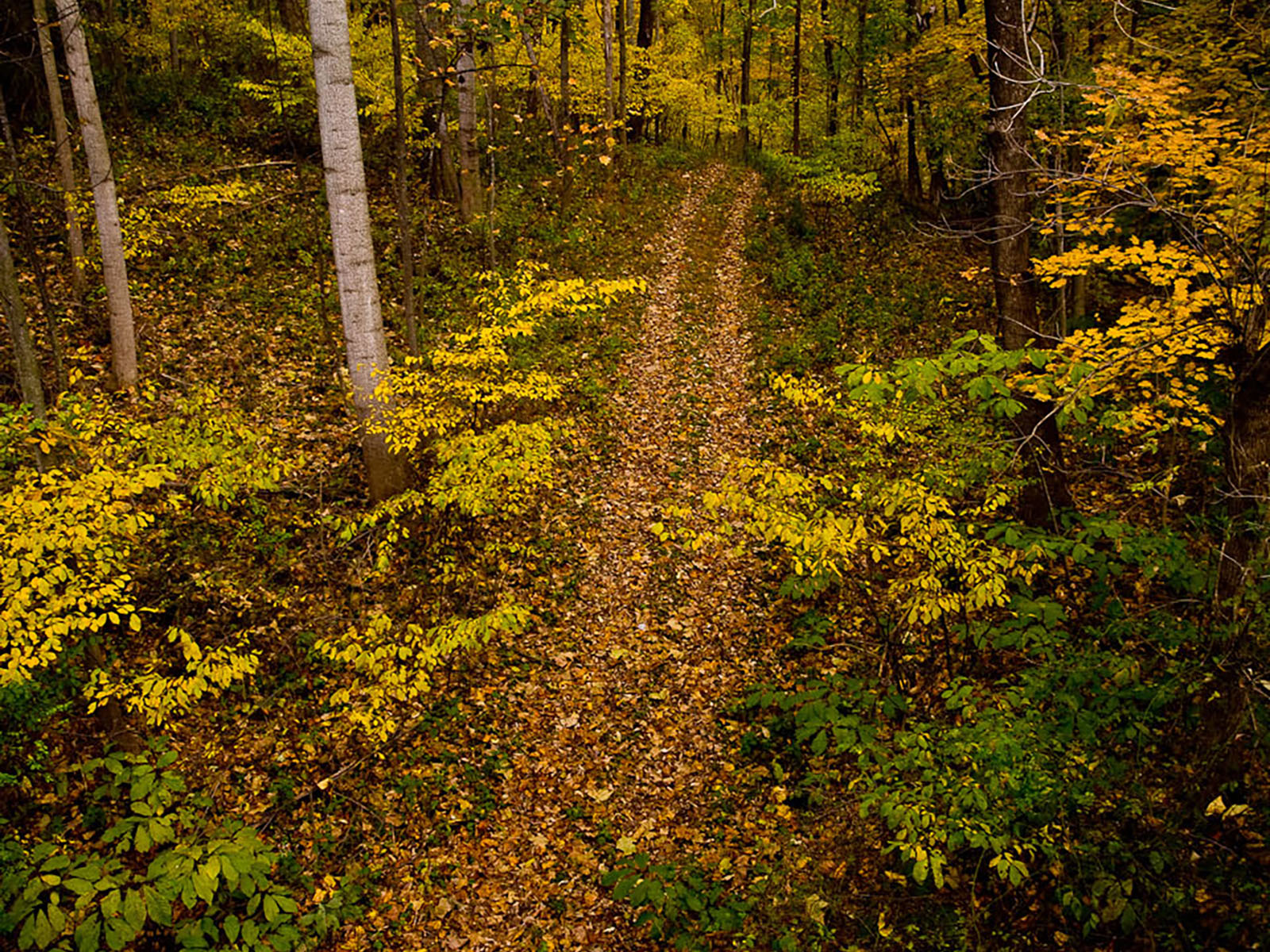 hight resolution of autumn leaf color in a deciduous forest