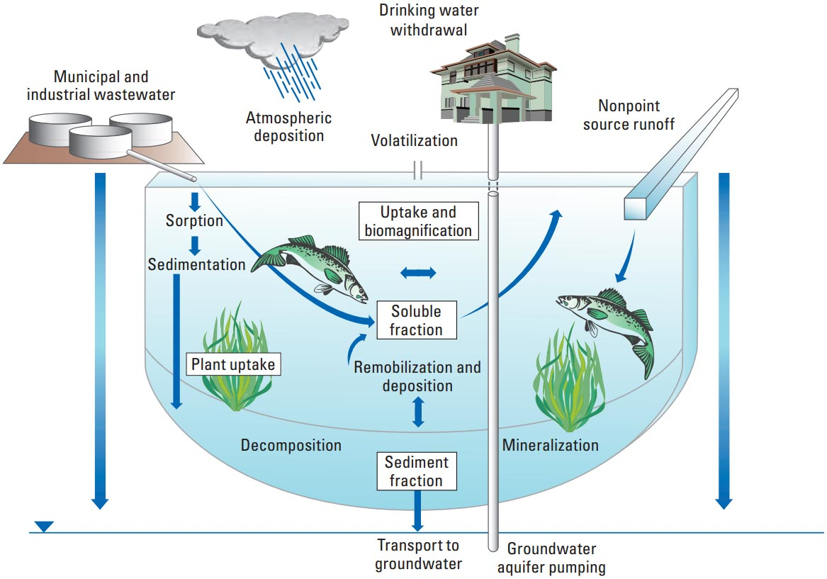 Energy Flow In Desert Ecosystem Energy Flow Among