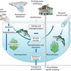 Water Ecosystem Diagram Virago 1100 Wiring Lake Food Web
