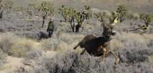 More Water for Mule Deer Mojave National Preserve US