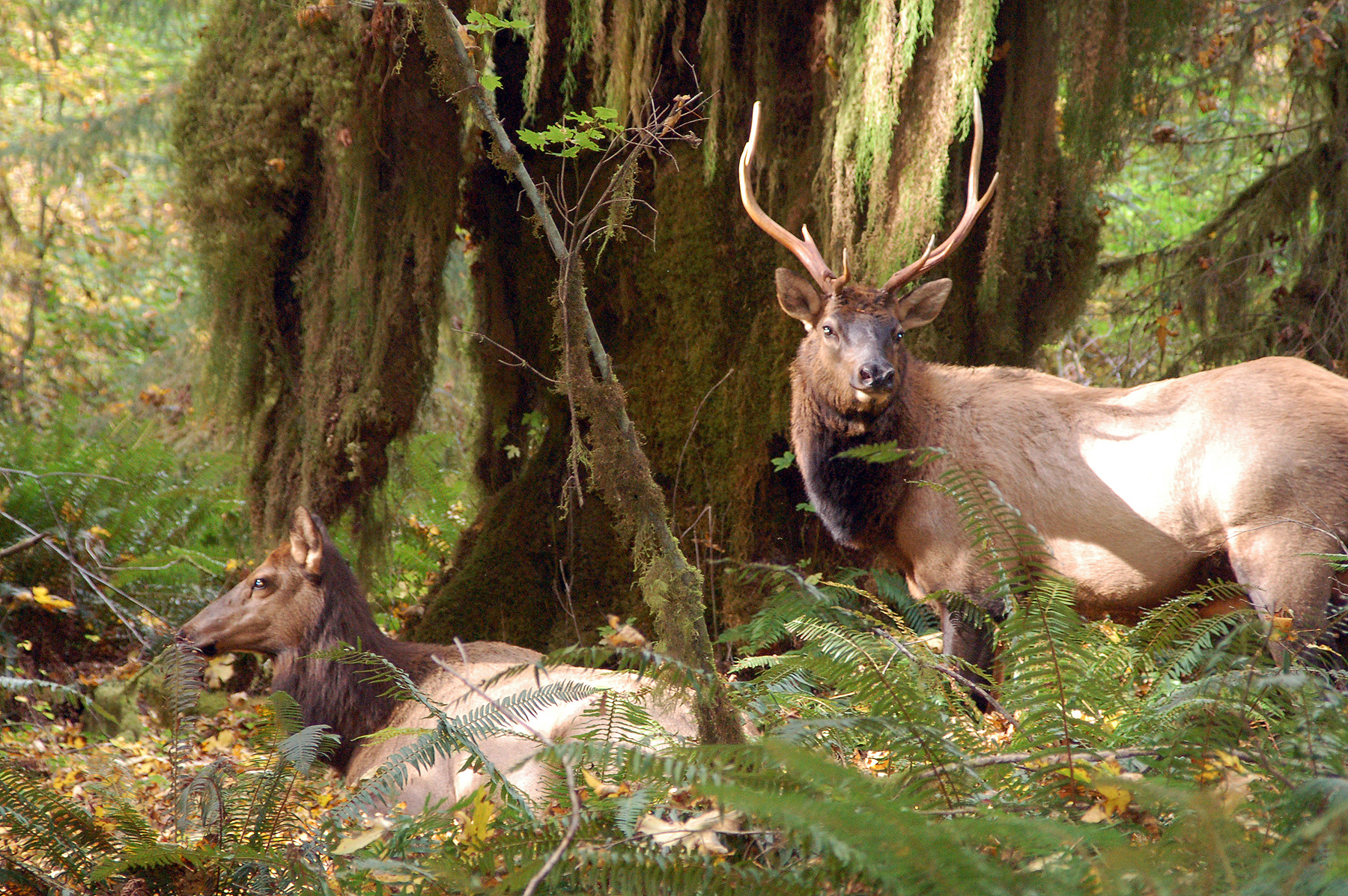 Jungle Wallpaper With Animals Suggested Reading Olympic National Park U S National