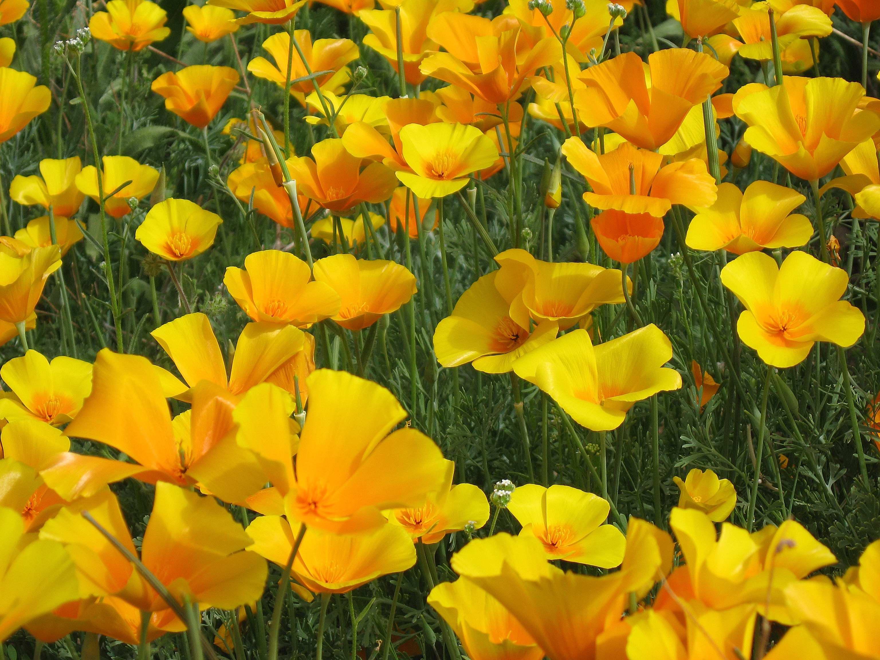 Plant Bios National Border National Park A History Of Organ Pipe