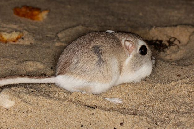 mammals padre island national
