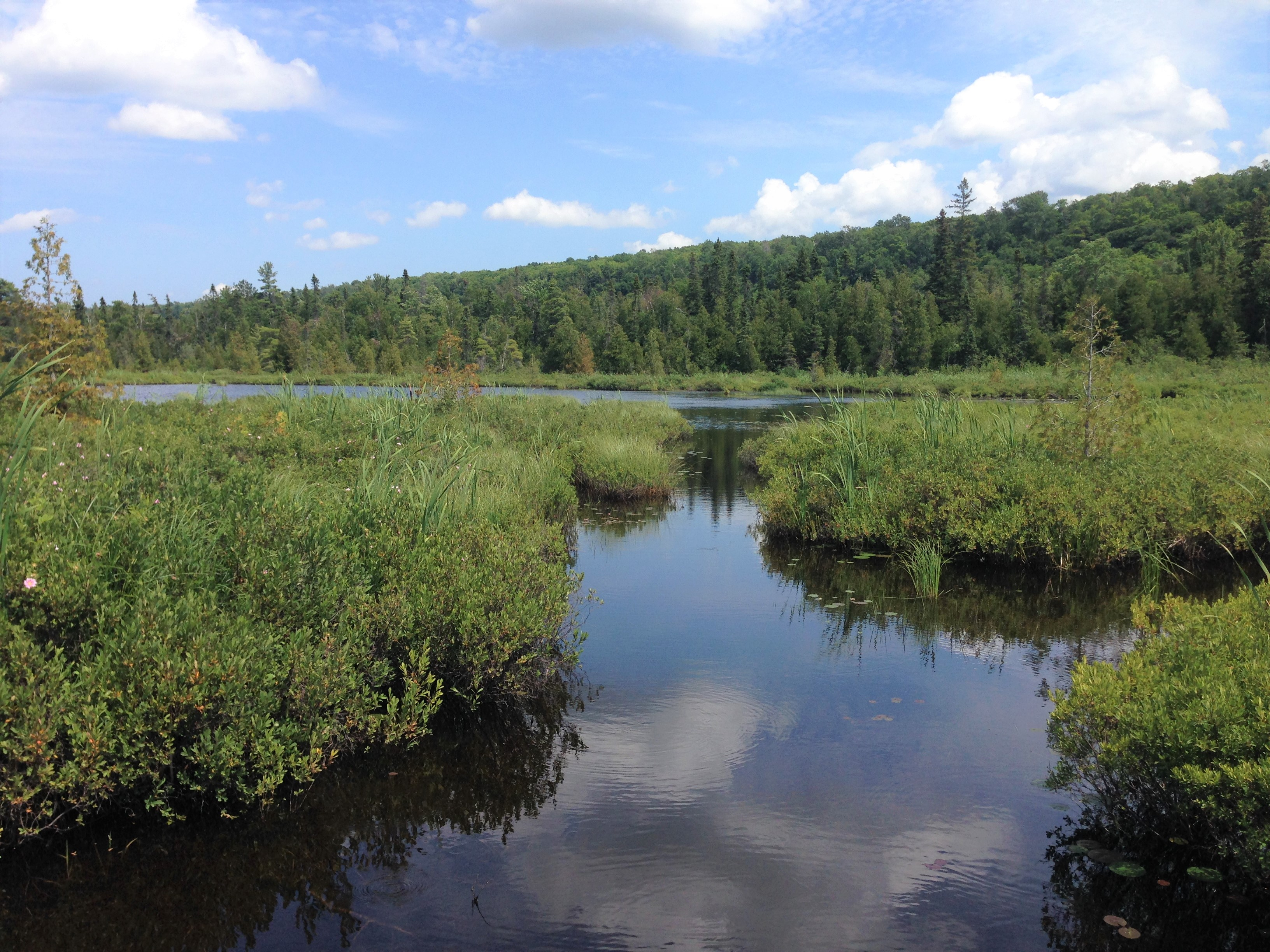 hight resolution of view of marsh from trail boardwalk