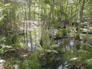 Wetlands Marshes And Swamps Pictured Rocks National Lakeshore