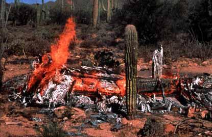 threats to the saguaro