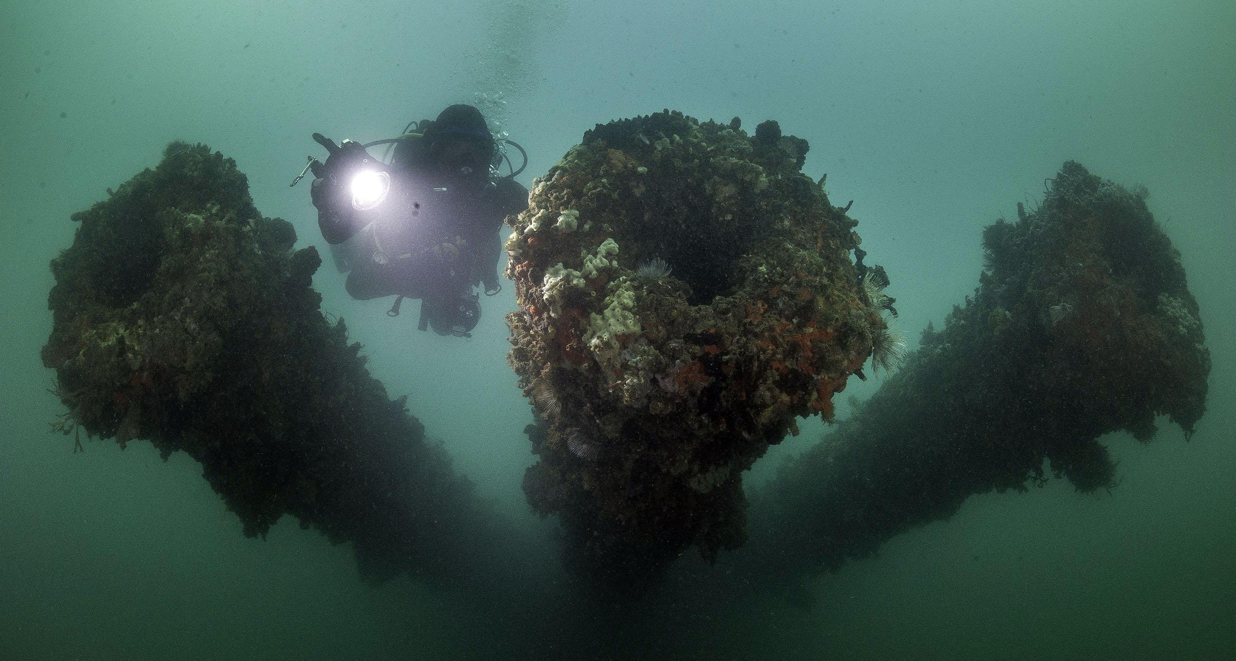 Live Dive