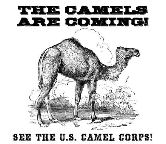 The U.S. Camel Corps Visits Vicksburg National Military