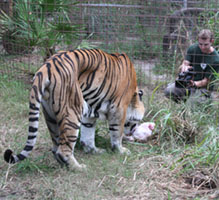 [Book Interview] Nonprofit Example of Social Media Excellence: Big Cat Rescue