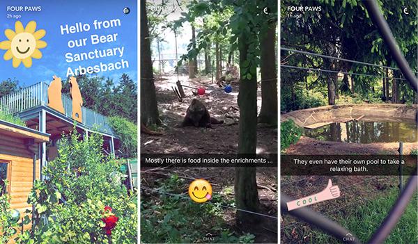 Four Paws Snapchat