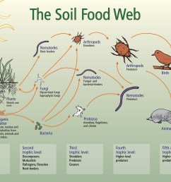 the food web organisms and their interaction [ 2958 x 2265 Pixel ]
