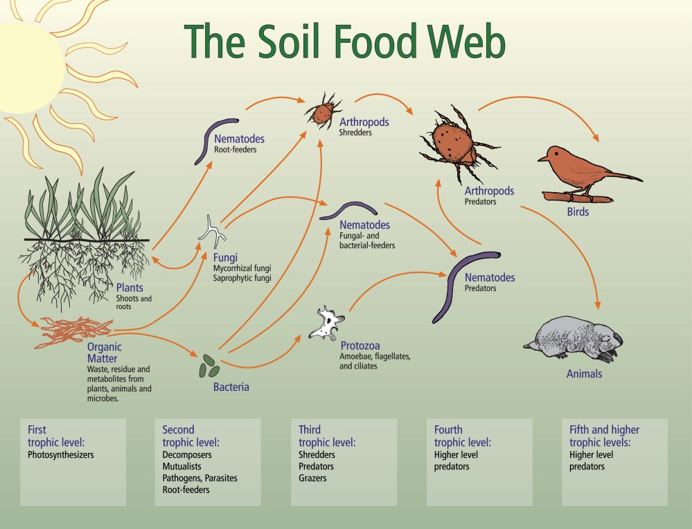medium resolution of the food web organisms and their interaction