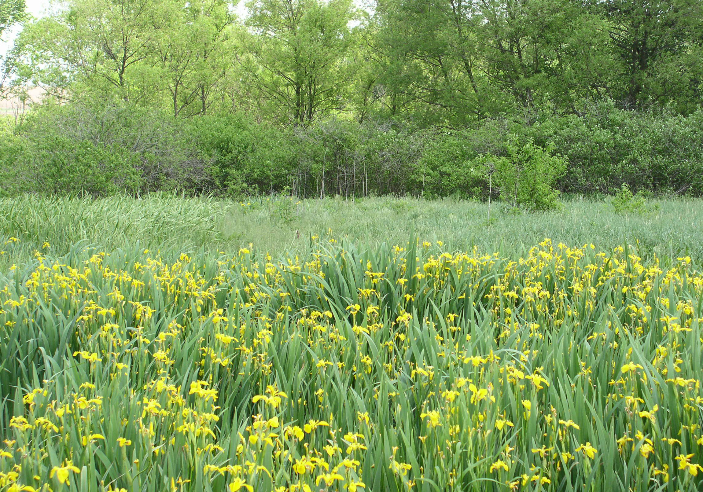 Native Prairie Plants Buffer
