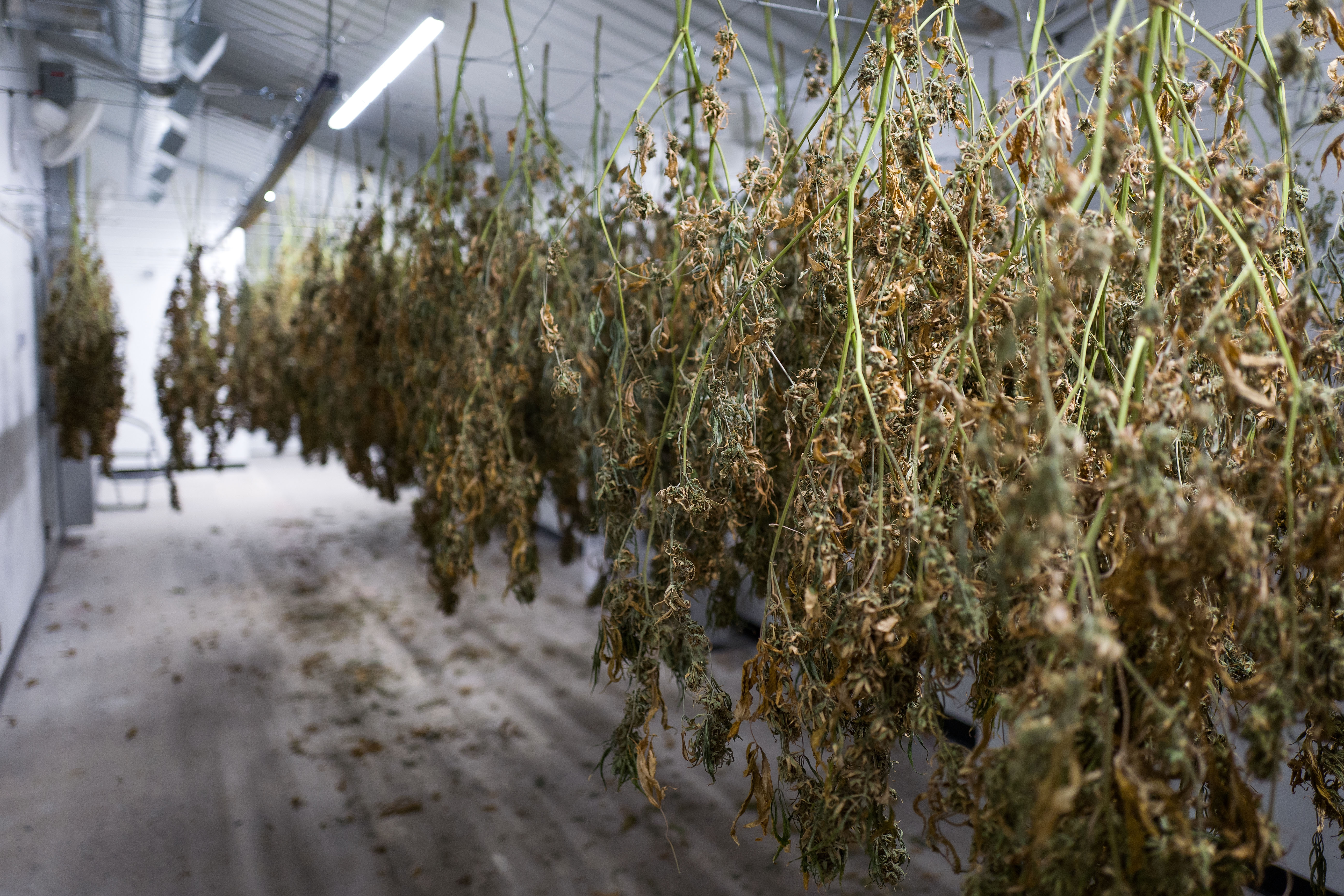 Whats Next for Marijuana Warehouses  National Real