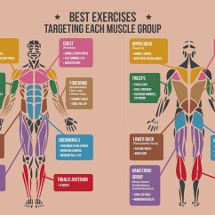 Pull Up Muscles Worked Diagram Electrical Installation Wiring Best Exercises For Targeting Each Muscle Group Nrg Fitness
