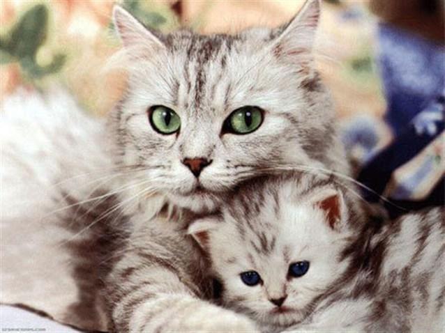 تفسير حلم رؤية القطط في المنام نسائم نيوز