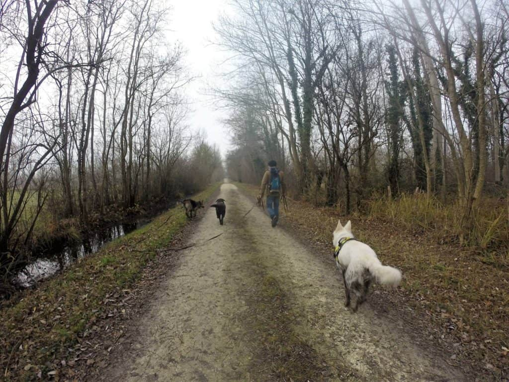 Sortie chiens libres - 18 Décembre 2016 (12)