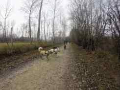 Sortie chiens libres - 18 Décembre 2016 (13)