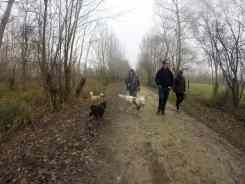 Sortie chiens libres - 18 Décembre 2016 (2)
