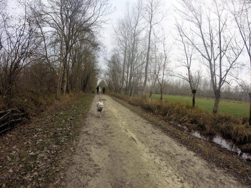 Sortie chiens libres - 18 Décembre 2016 (21)