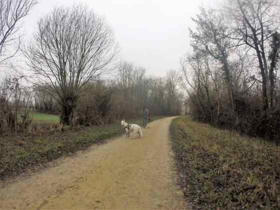 Sortie chiens libres - 18 Décembre 2016 (23)