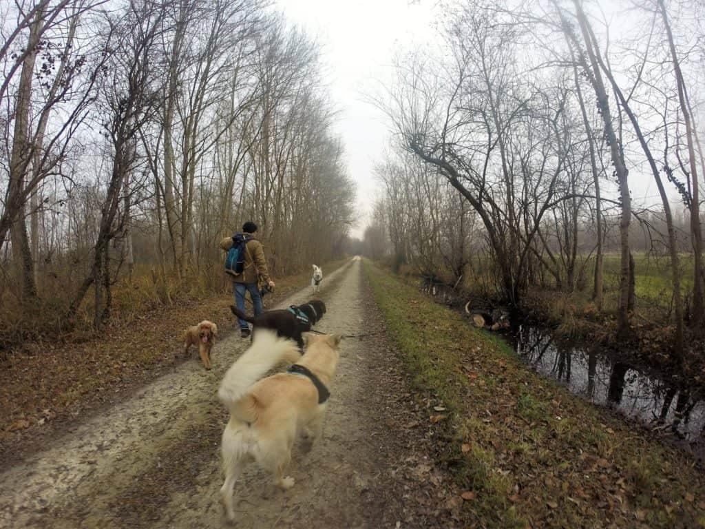 Sortie chiens libres - 18 Décembre 2016 (24)