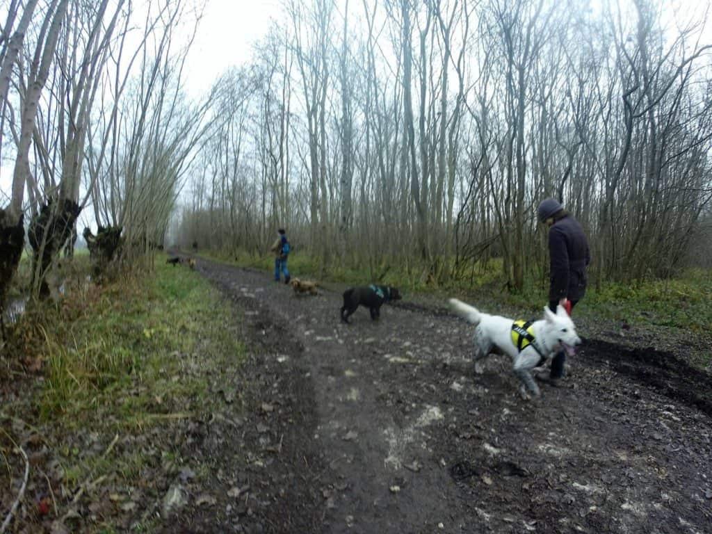 Sortie chiens libres - 18 Décembre 2016 (35)