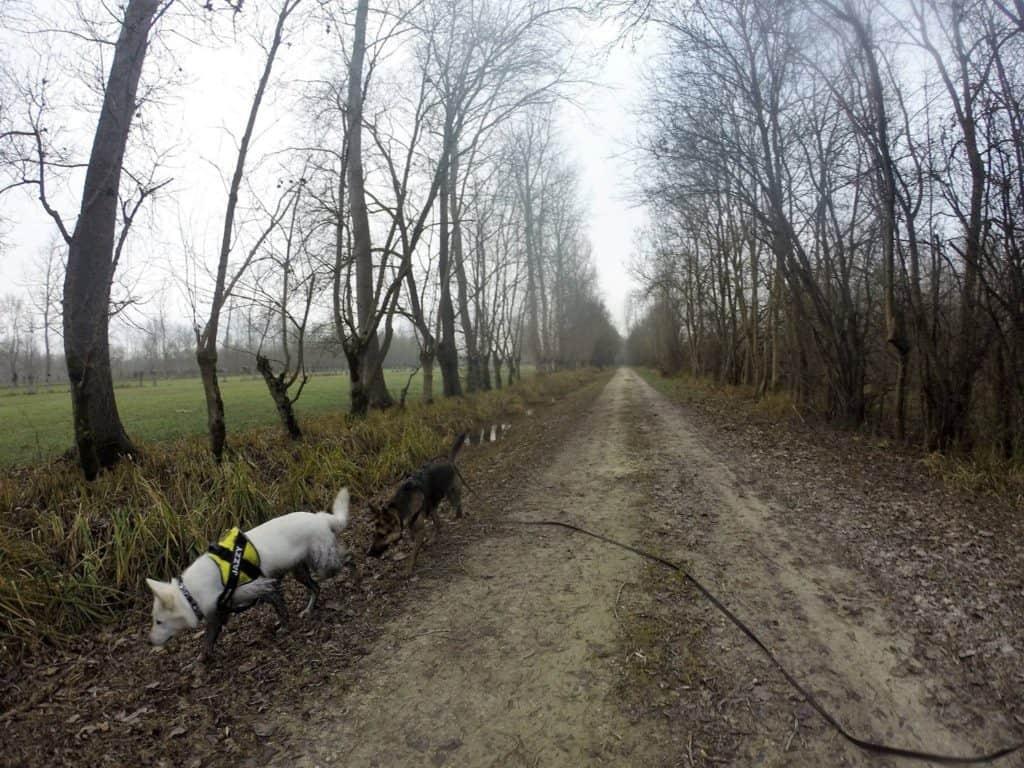 Sortie chiens libres - 18 Décembre 2016 (37)